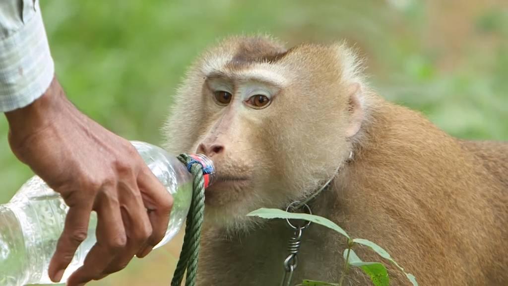 Thailand weist Anschuldigungen über Tiermissbrauch zurück