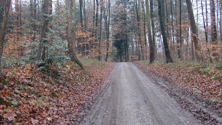 Die Bürgergemeinde musste für die Sanierung von Waldstrassen Geld aufwenden. (Symbolbild)