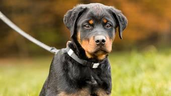 Polizeihund Gysmo