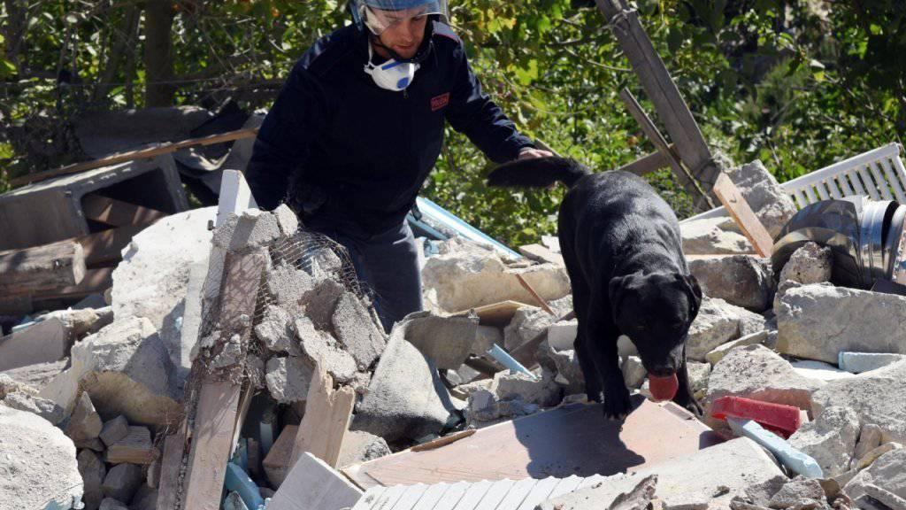 Erdbeben-Suchhund Leo bei der Arbeit. (Archiv)
