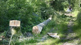 Bei einem Arbeitsunfall in einem Waldstück ist ein Mann tödlich verletzt worden. (Symbolbild)