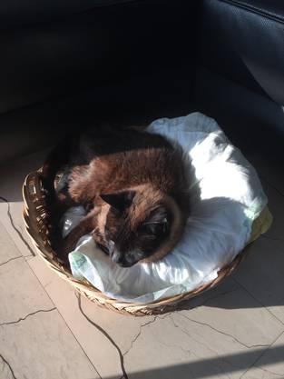Der Schmusetiger geniesst das Leben in seinem Körbchen an der Sonne