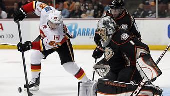 Anaheim-Goalie Jonas Hiller stoppt Calgarys Mike Cammalleri