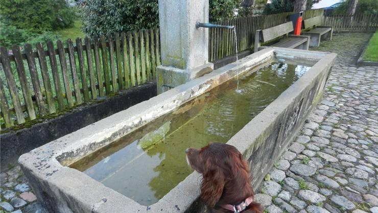 Sauberes, trinkbares Brunnenwasser ohne Einsatz von Chlor. sh.