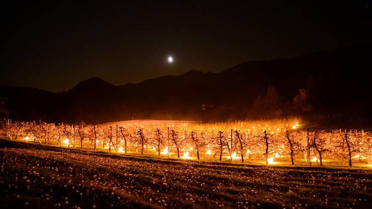 In Bretzwil halten Frostkerzen die Obstbäume nachts warm.