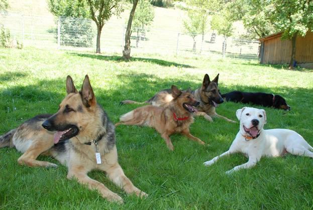 500'000 Hunde leben in der Schweiz