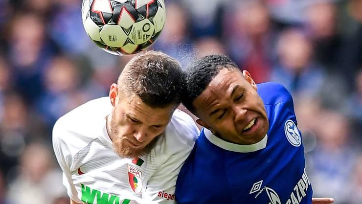 Augsburgs Jeffrey Gouweleeuw (links) im Duell gegen Schalkes Weston McKennie