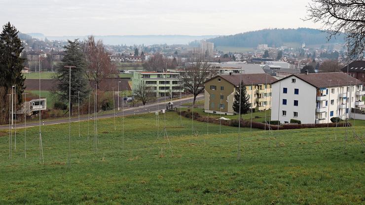Hier kommt ein Teil der Siedlung hin: Der Hang zwischen Hinterer Bergstrasse und Lenzstrasse.