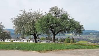 Gegner der Sammelstelle in Bellikon werfen der Gemeinde «Verscherbelung des Tafelsilbers» vor.