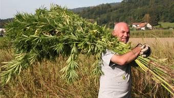 Roger Bottlang zeigt den Hanf so, wie er wirklich ist: ein nachwachsender Rohstoff. «Die Pflanze kann zu 100 Prozent verarbeitet werden», sagt Bottlang.