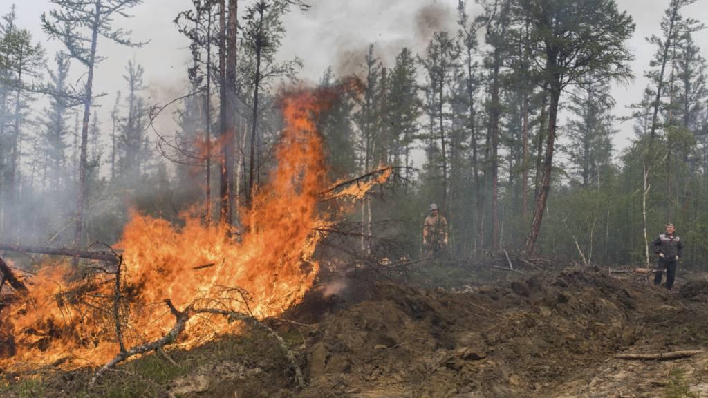 Freiwillige und Mitarbeiter löschen einen Waldbrand außerhalb des Dorfes Magaras westlich von Jakustk, der Hauptstadt der russischen Republik Sacha. In weiten Teilen Russlands kam es zu Waldbränden, die nach Einschätzungen von Umweltschützern nicht so schnell gelöscht werden können. Foto: Alexey Vasilyev/AP/dpa