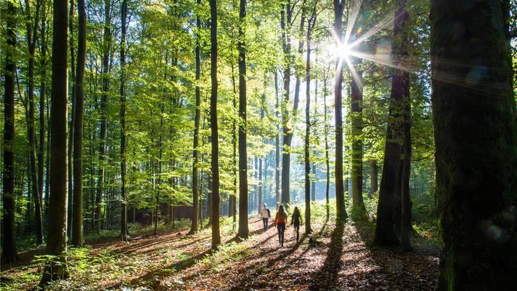 In einem Winterthurer Wald fanden die Schüler das Skelett. (Symbolbild)