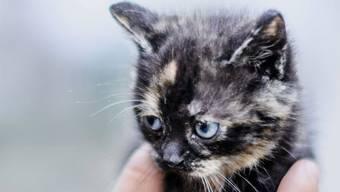 Seit dem 11. März sind Adoptionen wieder möglich: Die Katzenbabys im Tierheim Böhler sind aber erst 3-4 Wochen alt, da muss, wer eine möchte, noch ein bisschen warten.