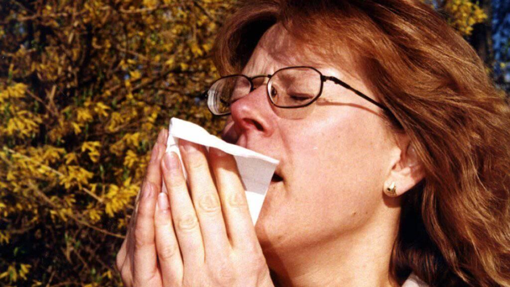 Klimawandel verheisst nichts Gutes für Pollenallergiker