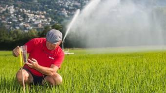 Betriebsleiter Markus Giger überwacht die Bewässerung eines Reisfeldes im Maggia-Delta bei Ascona, aufgenommen am 1. Juli 2018.