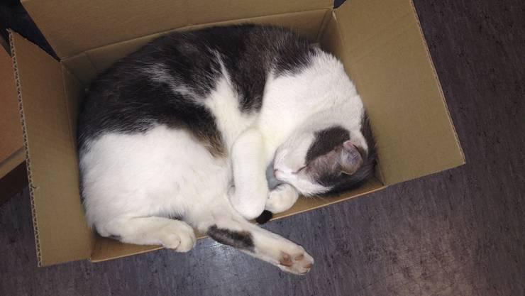 Kater Savas macht gerne mal ein Nickerchen in einer Post-Kartonschachtel.