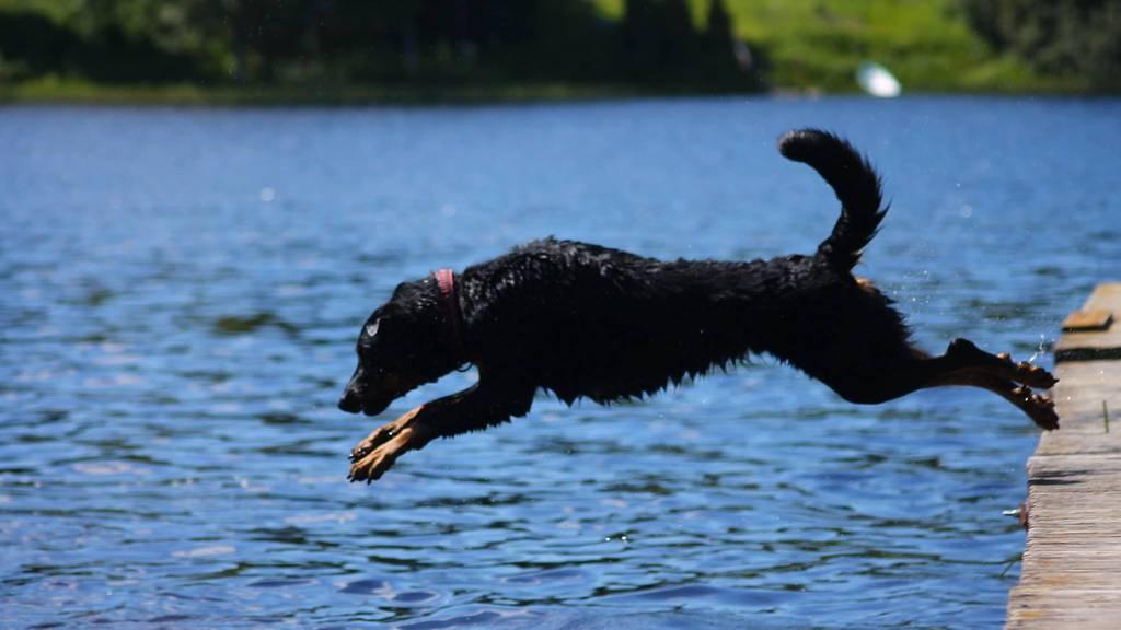 Stadt Zug macht den Weg frei für Hundeverbote in den Badis