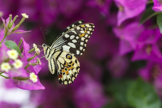 Zahlreiche dieser schönen Tiere können beobachtet werden