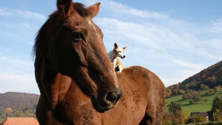 Diese beiden schauen der Zukunft gelassen entgegen: Pferd Oliver Twist und Hund Gipsy.  jessica dubois