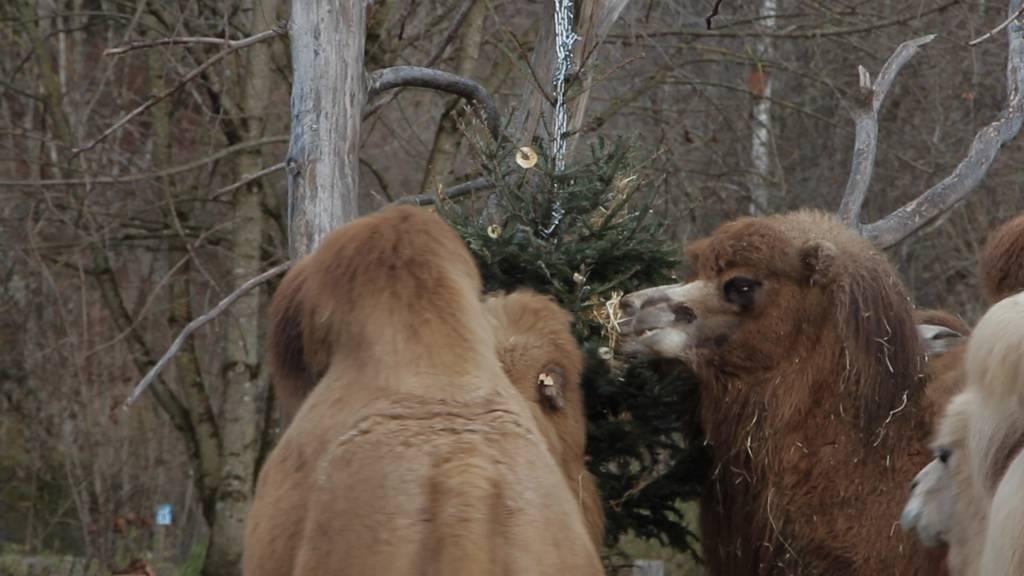 Diese Weihnachtstypen findest du bei dir zu Hause – und im Zoo
