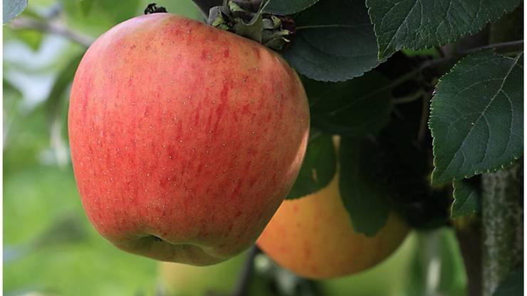 Dank Apfel einen Wunsch erfüllen. TR
