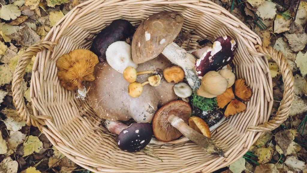 Was du beim Pilzen beachten musst