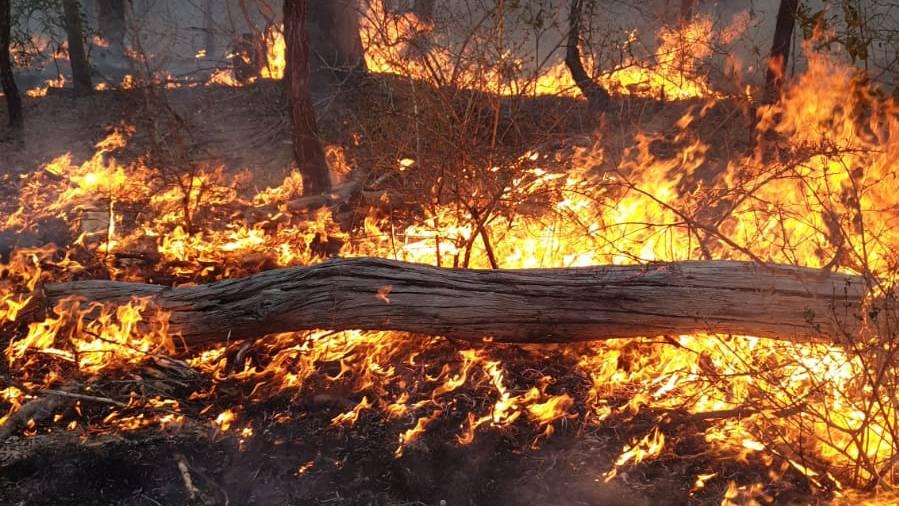 Aargauer in Australien Buschbrände