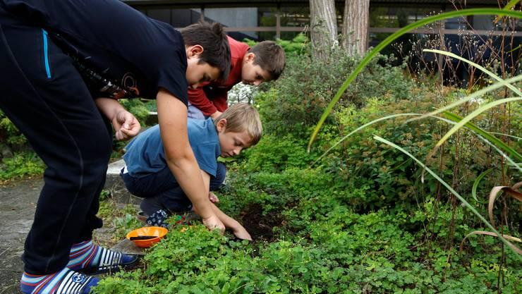 Auf der Suche nach Regenwürmern