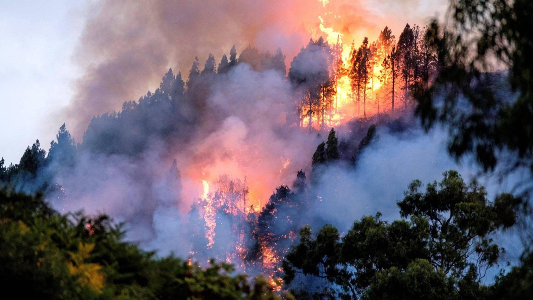 Schwere Waldbrände auf Gran Canaria