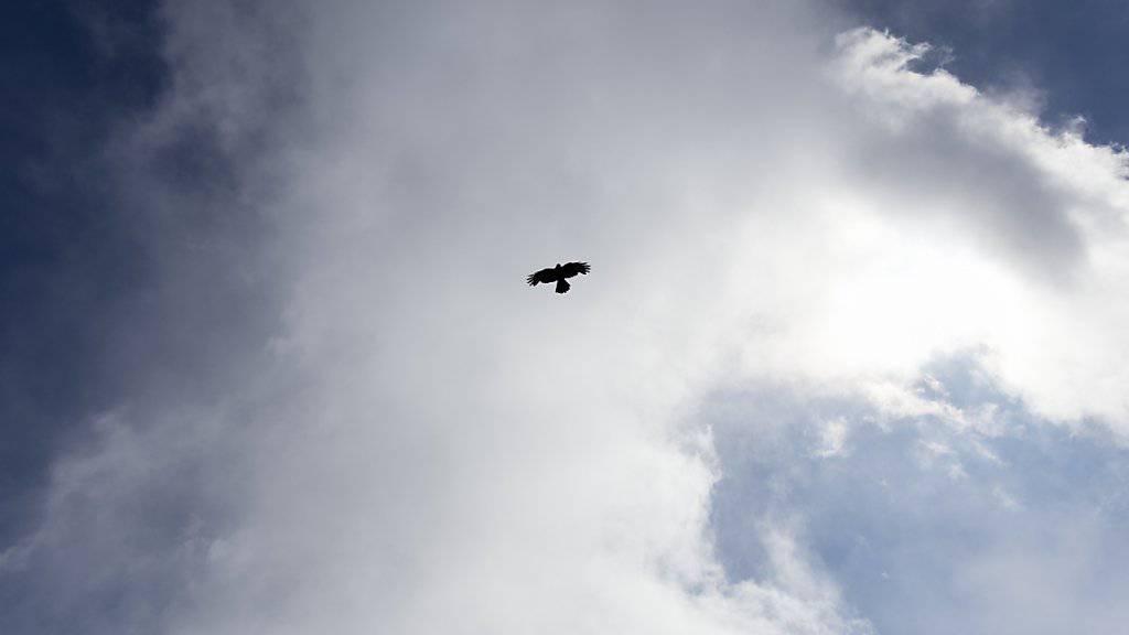 Raubvögel stellen im Luftverkehr ein Sicherheitsrisiko dar.