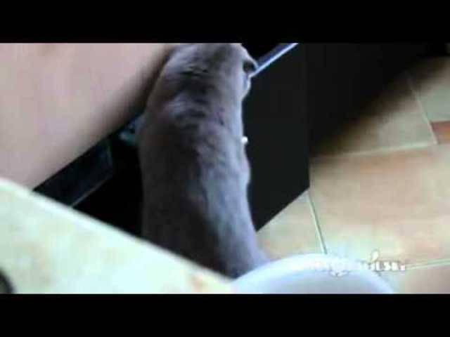Katze beim Klauen erwischt