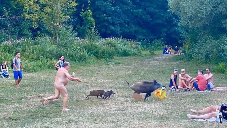 Wildschwein klaut Nacktem den Laptop – was folgt, ist eine amüsante Verfolgungsjagd