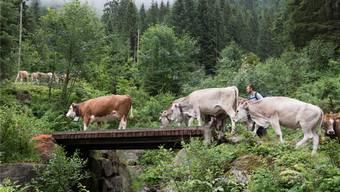 In der Schweiz hat sich in den letzten hundert Jahren vieles verändert: So auch die Anzahl Rinder auf den Wiesen des Landes.