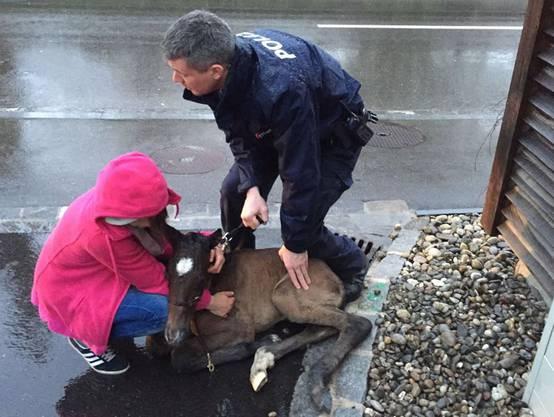 Dieses Fohlen war im April 2016 nur wenige Stunden nach seiner Geburt ausgebüxt; es konnte von der Polizei gefangen und unverletzt zurückgebracht werden.