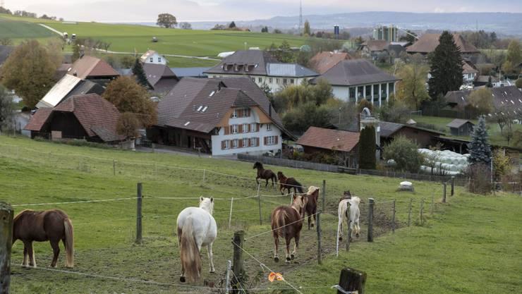 Beim Projekt Alp können Menschen mit Schwierigkeiten, statt in einer Klinik, auf einem Bauernhof leben und arbeiten. So sollen sie den Weg zurück in die Gesellschaft schaffen.