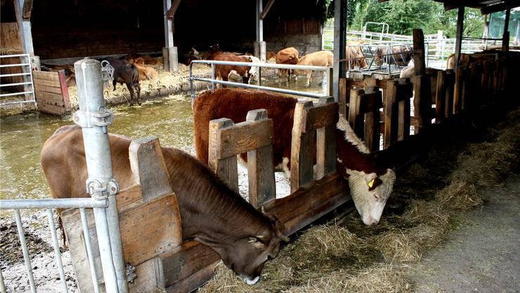 Samuel Spahns Rinder vom Biohof Fondli in Dietikon werden für die Schlachtung nach Zürich und in die Ostschweiz gebracht. Für den Bauern ist der Weg vertretbar. gep