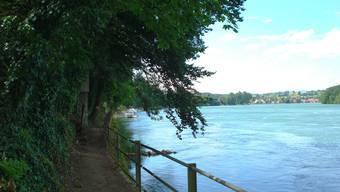 Das idyllische Rheinufer bei Mumpf. Archiv