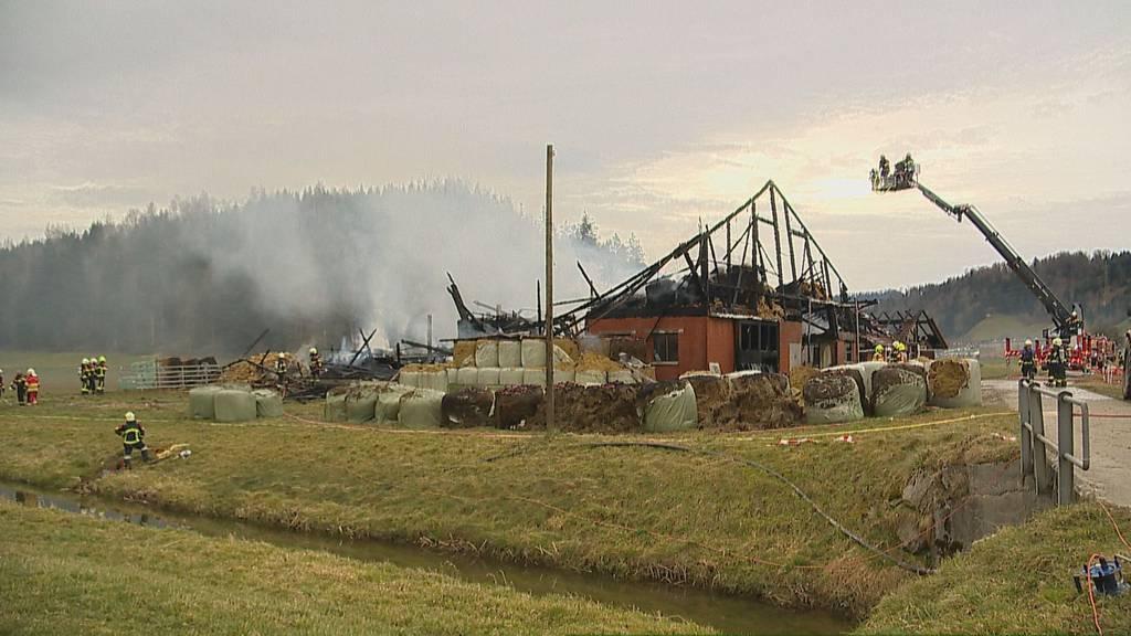 Willisau: Vier Kälber sterben bei Scheunenbrand