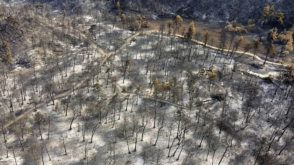 Luftaufnahme eines niedergebrannten Waldes im Dorf Agia Anna auf der Insel Euböa. In Griechenland hat sich die Lage bei den Großbränden wegen nächtlicher Regenfälle leicht entspannt.
