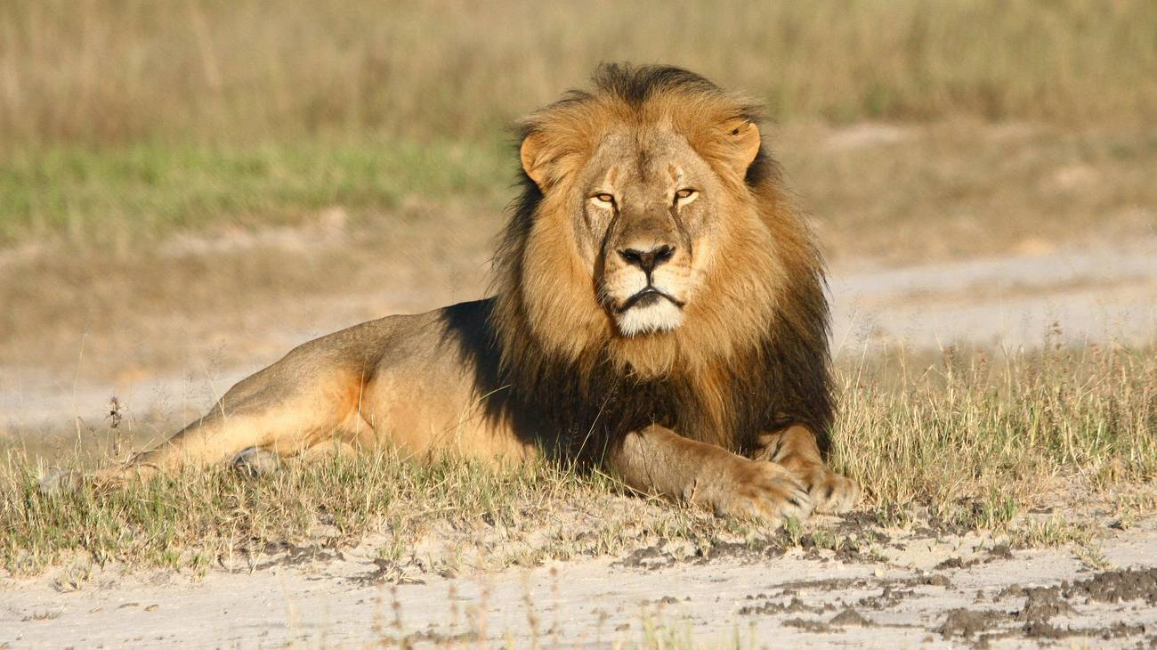 Safari 36 Grad Südafrika (© Keystone)