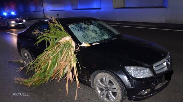 Kaputte Frontscheibe und ein Busch Maispflanzen in der Beifahrertür