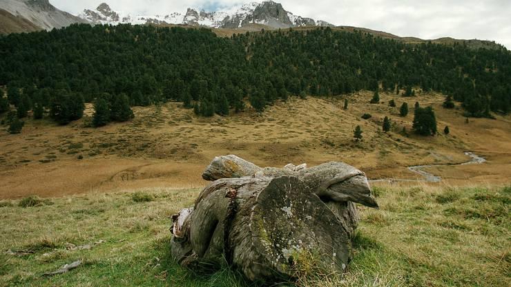 """Im Nationalpark """"Val Müstair"""" erlebt man Natur, die von der Zivilisation unberührt ist."""