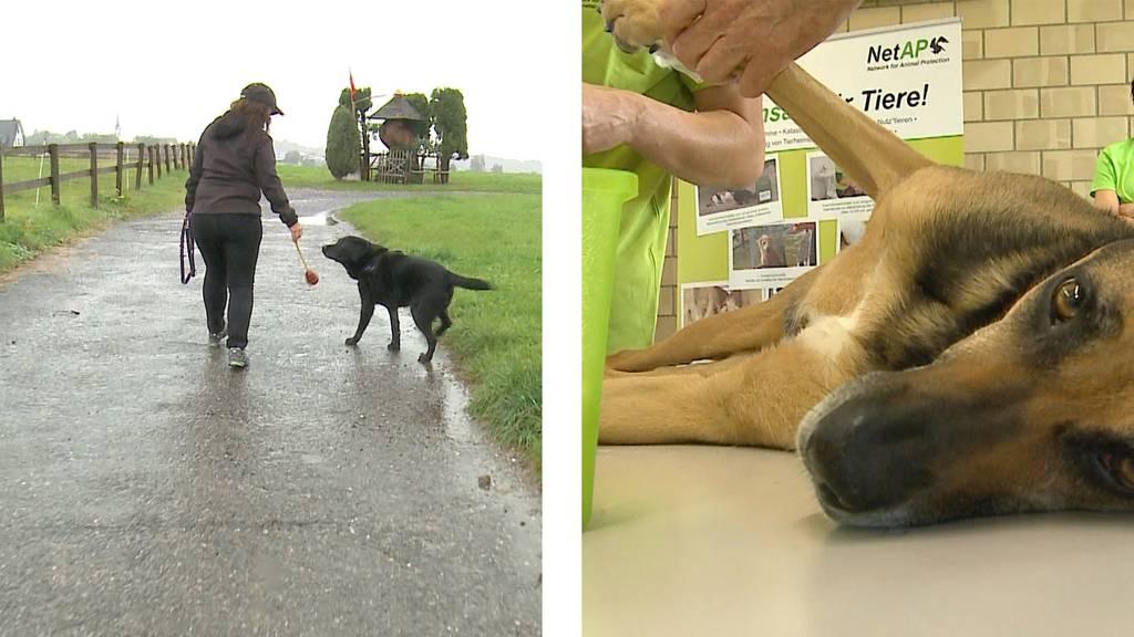 Senioren-Blindenführhund / Tierische Nothilfe