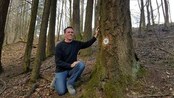 Markus Dietiker von den Forstdiensten Lenzia zeigt seine Lieblings-Douglasie im Waldfriedhof auf dem Staufberg.