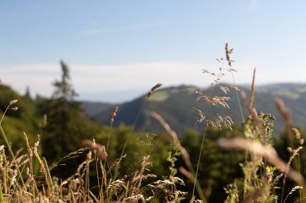Die Landschaft wechselt von Wald zu einer idyllischen Weidenlandschaft mit Blick aufs Jura.
