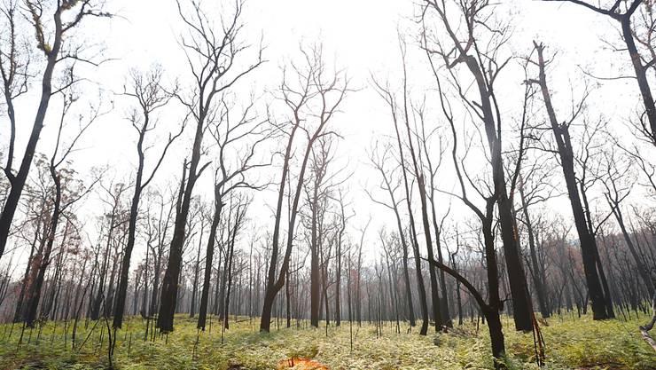 Die Buschfeuer in Australien haben nach Angaben der Regierung riesige Mengen an CO2 freigesetzt, mehr als der übliche Treibhausgas-Ausstoss in einem Jahr. (Archivbild)