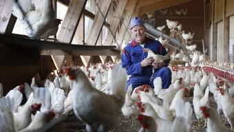 Eierproduktion auf dem Hof von Daniel Murer