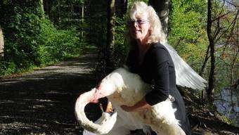 «Der neue Rheinsteg ist eine Vogelfalle»: Carmen Weitzel mit einem verletzten Schwan.
