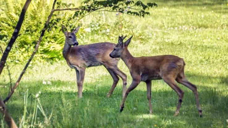 Während Corona haben sich die Tiere anders verhalten - wie genau, das soll nun erforscht werden.