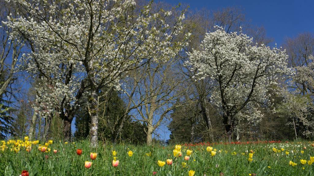 Rekordverdächtige Pollensaison in der Schweiz